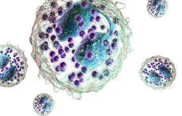 Эозинофилы повышены нейтрофилы понижены у ребенка