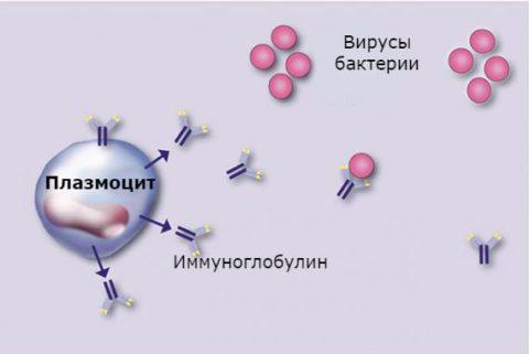 Норма плазматические клетки в анализе крови что это