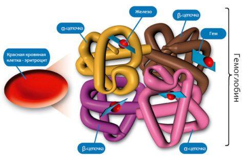 Цветной показатель крови у ребенка ниже нормы