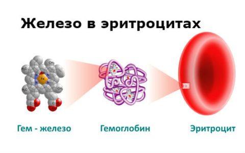 Биохимический анализ крови расшифровка железо норма